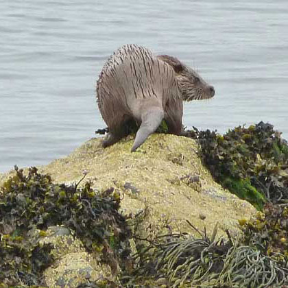 Mull Magic Otter Detective Walk